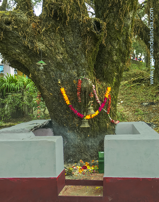 Down a few steps from the temple, a sign written in Hindi indicates this tree to be where Babaji Maharaj used to sit and meditate, and where he and Lahiri Mahasaya would meet.