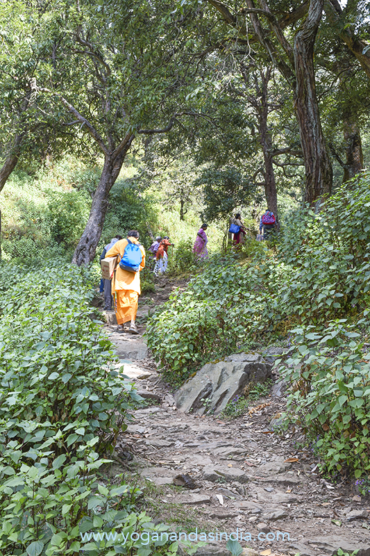 The well-maintained trail up the mountain undulates through the lush jungle.