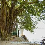 """Babaji declined an offer to come to Sri Yukteswar's home. He said he preferred to sit here because """"We are under-the-tree people. We like to sit under trees."""""""